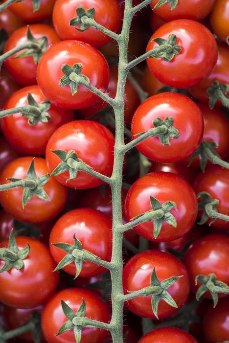 Ernte-Tour Tomaten und Gurken. Foto © BVEO/Hendrik Haase
