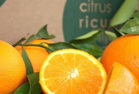 Demeter-Orangen: Projekt in Valencia