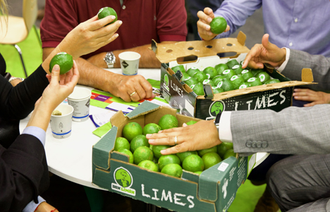 Limonen in Mexiko. Foto © Don Limón