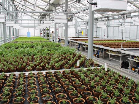 ALTMARKTgarten: Über 1000 m2 Fläche in vier Klimazonen. Foto © Fraunhofer UMSICHT