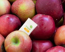 Foto © Hazel™ für Äpfel