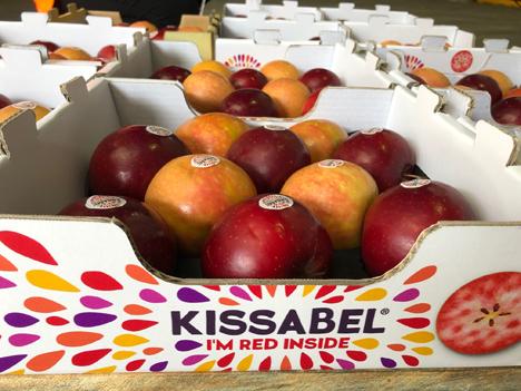 Kissabel® Foto © Ifored-Kissabel