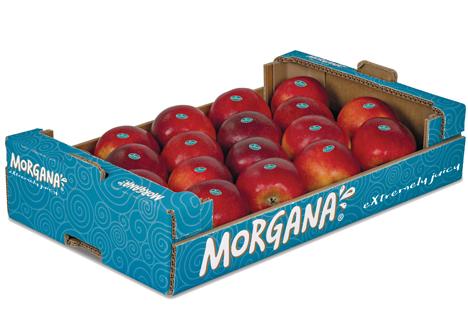 Morgana® Foto © Unternehmensgruppe KRINGS