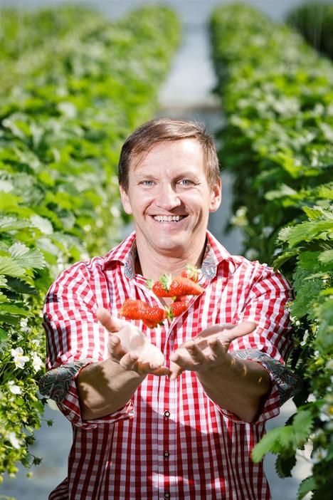 Die Familie von Markus Gutmann baut bereits seit rund 50 Jahren steirische Erdbeeren an. Foto © SPAR honorarfrei@Foto Luef