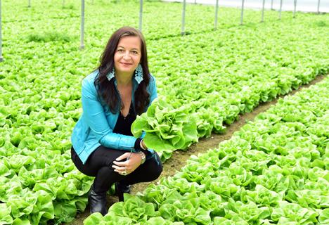 Sla: Besonderer Saisonstart fürs Wiener Gemüse. Copyright: PID/Jobst