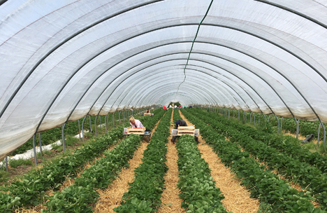 Foto © bwgv-Werbefonds Obst, Gemüse, Gartenbau