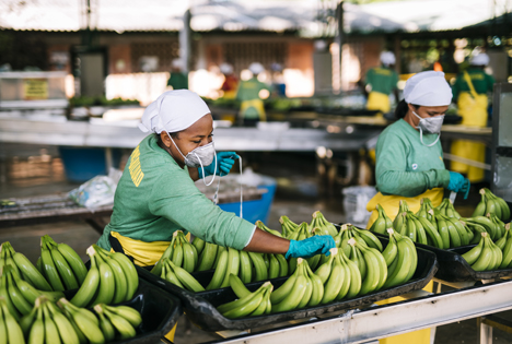 130.000 Tonnen Fairtrade-Bananen wurden 2019 verkauft. Damit ist jede fünfte Banane fair gehandelt. Beschäftigte in Kolumbien. Foto © Christoph Köstlin / Fairtrade