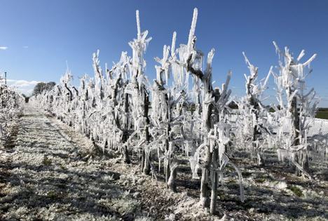 Frost Foto © Landvolk Niedersachsen