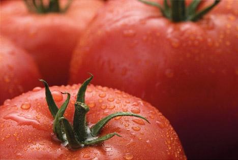 Foto © Syngenta Vegetable Seeds