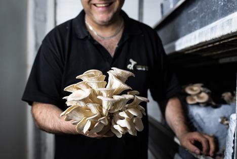Austernpilzerzeuger John Verbruggen. Foto © Too Good To Go NL