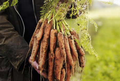 GB: Waitrose dehnt Angebot von schiefem Gemüse aus