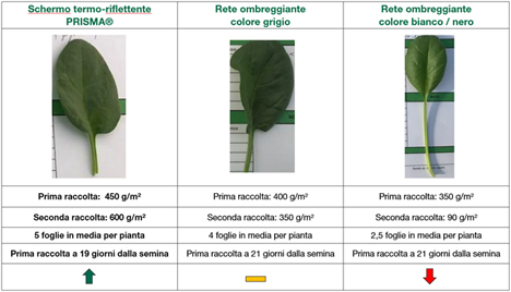 (Die Tabelle zeigt die quantitativen Ergebnisse des Tests) Foto © Arrigoni