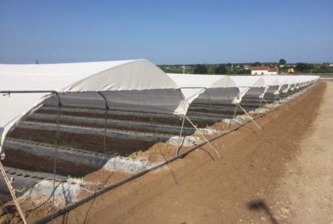 Arrigoni: Agrartextilien ermöglichen Beerenanbau sogar in ungewohntem Klima