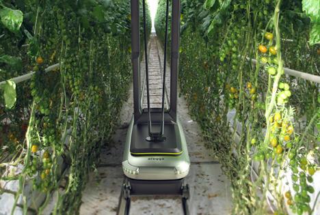 Biobest investiert in Arugga Roboter-Tomatenbestäubung