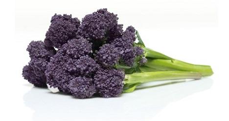 Burgundy Broccoli. Foto © Elsoms