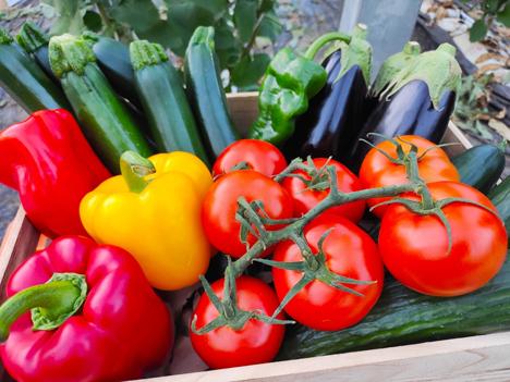 CuteSolar Obst und Gemüse. Foto ©  APROA/Curro Vallejo