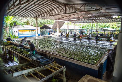 Edeka-Verbund treibt Süßwasserschutz in Lieferketten voran