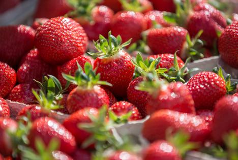 VSSE: Zwischenbilanz zur Erdbeersaison in Süddeutschland