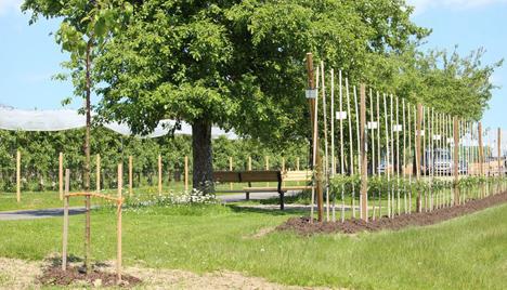 Der Sortengarten in Schlachters. Foto © Versuchsstation für Obstbau Schlachters