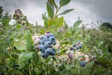 Foto © Ehrecke/Landwirtschaftskammer Niedersachsen