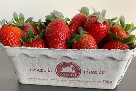 Erdbeeren Otello. Foto © KÖLLA Gruppe