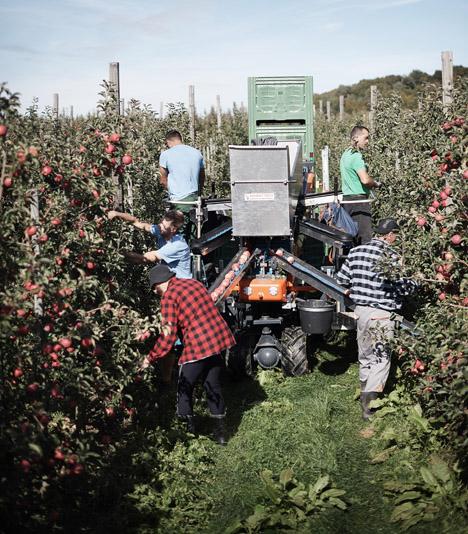 Foto © Obst vom Bodensee Vertriebsgesellschaft mbH