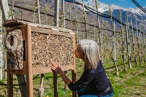 Foto © Verband der Vinschgauer Produzenten für Obst und Gemüse