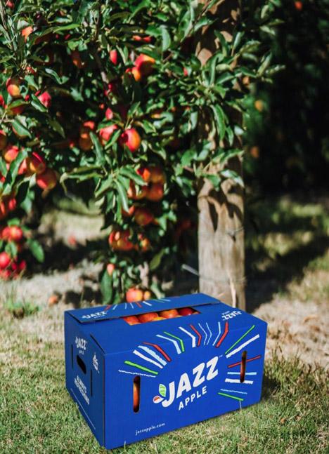 JAZZ™ Apfel Foto © T&G Global