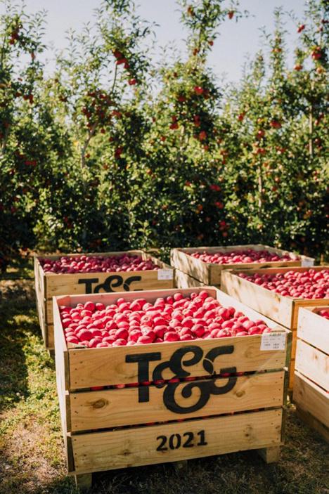 Poppi™-Apfel. Foto © T&G Global