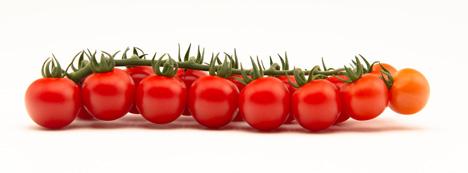 Top Seeds International mrt 2021 cherry tomato vine