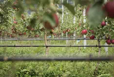 VOG: Zufriedenstellender Verlauf der Vermarktungssaison - ganzjährige Verfügbarkeit der Bio-Äpfel
