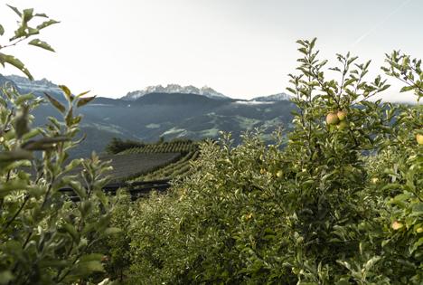 VOG als Mitgestalter von sustainapple, der Nachhaltigkeitsstrategie des Südtiroler Apfelkonsortiums