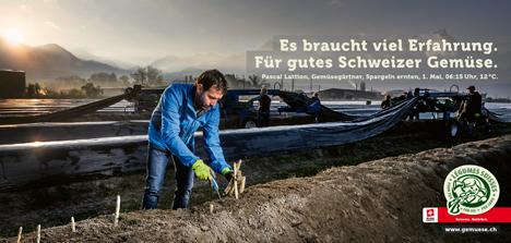 Pascal Lattion, Spargel ernten. Foto © Verband Schweizer Gemüseproduzenten (VSGP)