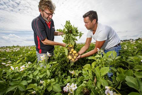 Kartoffelerzeuger in Zusammenarbeit mit Albert Heijn. Foto © Albert Heijn
