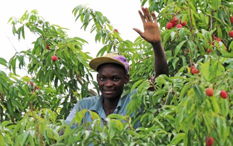 Foto © Westfalia Fruit Group